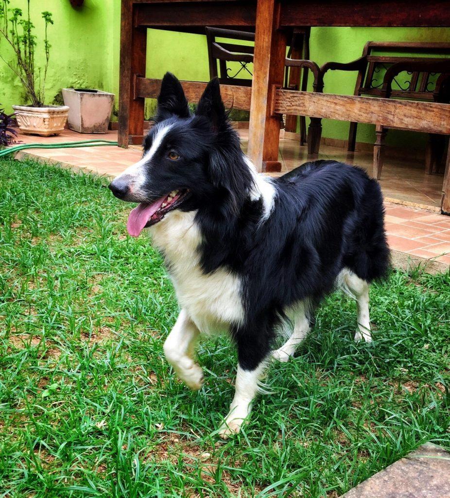 Eu me chamo Lassie