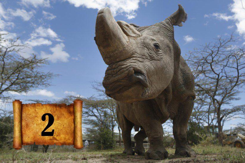A marcha da extinção