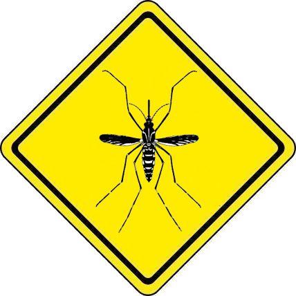 Aedes aegypti, o polivalente